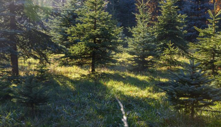 Lesy ČR a hasiči budou těsněji spolupracovat při prevenci požárů