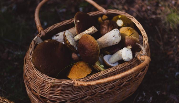 Policie hledala ztracené houbaře v lese. Za posledních deset dní se jich ztratilo už šest