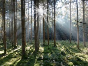 Lesy ČR by měly zaplatit pokutu půl milionu korun