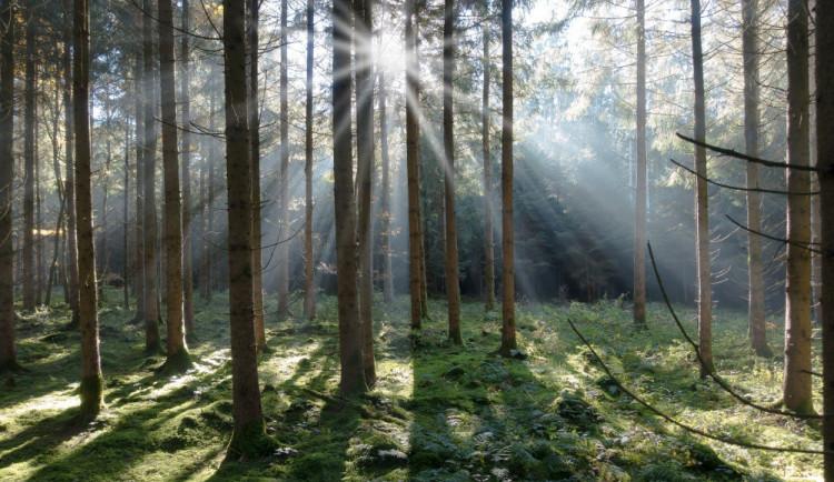 Lesy ČR prožívají noční můru. Hrozí jím ztráta přes 100 milionů