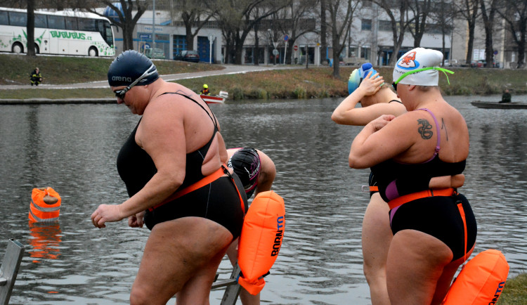 Labe patřilo o víkendu otužilcům. Plaveckých závodů se zúčastnili i zahraniční sportovci